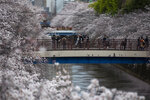 """People wearing protective masks to help curb the spread of the coronavirus gather on bridges as cherry blossoms bloom over Meguro River Sunday, March 28, 2021, in Tokyo. Japan's favorite flower, called """"sakura,"""" started blooming earlier this month and has already peaked in many places, setting the earliest records in more than a dozen cities across the country.(AP Photo/Kiichiro Sato)"""