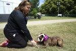 Stella, a bulldog, practices a conditioning exercise with owner Lisa Hayes after competing in the Westminster Kennel Club dog show's agility contest on Friday, June 11,  2021, in Tarrytown, New York. Because of pandemic precautions, the prestigious dog show is being held outside New York City for the first time. (AP Photo/Jennifer Peltz)