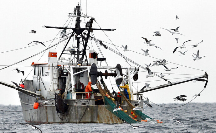 FILE-In this Jan. 6, 2012 file photo, gulls follow a shrimp fishing boat as crewmen haul in their catch in the Gulf of Maine. The state's historic shrimp industry is closed due to warming oceans, and people who formerly worked in it are grappling with the question of whether consumers will remember the seafood if it ever comes back. (AP Photo/Robert F. Bukaty, File)