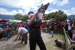 In this Saturday, Oct. 26, 2019, photo, a man lifts a prize pig he managed to catch during a pig wrangling competition during Toba Pig and Pork Festival, in Muara, North Sumatra, Indonesia. Christian residents in Muslim-majority Indonesia's remote Lake Toba region have launched a new festival celebrating pigs that they say is a response to efforts to promote halal tourism in the area. The festival features competitions in barbecuing, pig calling and pig catching as well as live music and other entertainment that organizers say are parts of the culture of the community that lives in the area. (AP Photo/Binsar Bakkara)
