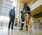 This Sept. 9, 2021 photo, shows victim advocate Irene Melendez holding the leash of Judge, a 3-year-old yellow Lab, while speaking to a security guard at the First Judicial District courthouse in Santa Fe, N.M. The dog is the first courthouse facility dog to be employed by District Attorney Mary Carmack-Altwies' office in a collaborative effort with Assistance Dogs of the West. (Matt Dahlseid/Santa Fe New Mexican via AP)