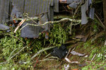 A television is seen among the debris of a crushed house in the aftermath of a mudslide that destroyed three homes on a hillside in Sausalito, Calif., Thursday, Feb. 14, 2019. Waves of heavy rain pounded California on Thursday, filling normally dry creeks and rivers with muddy torrents, flooding roadways and forcing residents to flee their homes in communities scorched by wildfires. (AP Photo/Michael Short)