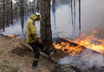 A firefighter kicks at a log while helping to build a containment line at a fire near Bodalla, Australia, Sunday, Jan. 12, 2020. Authorities are using relatively benign conditions forecast in southeast Australia for a week or more to consolidate containment lines around scores of fires that are likely to burn for weeks without heavy rainfall. (AP Photo/Rick Rycroft)