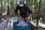 A gold miner washes a carpet used to trap gold fragments as he works at an illegal mine in the Amazon jungle, in the Itaituba area of Para state, Brazil, Friday, Aug. 21, 2020. It's part of a gold rush that started in 1984 after the precious metal was discovered in the region, where around 30 tons of gold worth some $1.1 billion are illegally traded in the state of Para annually, according to National Mining Agency estimates, or about six times more than the amount legally declared. (AP Photo/Lucas Dumphreys)