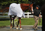 Triple Crown hopeful Justify is led out of the stable for a bath after a workout at Belmont Park, Friday, June 8, 2018, in Elmont, N.Y. Justify will attempt to become the 13th Triple Crown winner when he races in the 150th running of the Belmont Stakes horse race on Saturday. (AP Photo/Julie Jacobson)