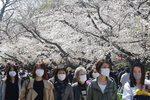 People wearing face masks to protect against the spread of the coronavirus walk under cherry blossoms in Tokyo, Tuesday, March 23, 2021. Cherry blossoms in many parts of Japan used to reach its prime in April just as the country celebrates the start of its new school and business year. Today, they bloom earlier in the spring and are mostly gone for the occasion, most likely because of the climate change.(AP Photo/Koji Sasahara)