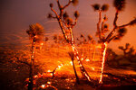 The wind whips embers from the Joshua trees burning in the Bobcat Fire in Juniper Hills, Calif., Friday, Sept. 18, 2020. (AP Photo/Ringo H.W. Chiu)
