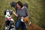 "Lindsay Terwilliger gives treats to her dogs Theia, Pearl and Dallas at her farm in Elon, Va. on Thursday, Dec. 17, 2020. Terwilliger, who has been fostering and rescuing animals for 15 years, said animals have a tendency to ""choose"" their owners, which she believes all of her animals have done with her. (Kendall Warner/The News & Advance via AP)"