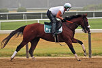 Belmont Stakes hopeful Robin Smullen rides Tiz the Law during a workout at Belmont Park in Elmont, N.Y., Friday, June 19, 2020. The Belmont Stakes is scheduled to run on Saturday. (AP Photo/Seth Wenig)