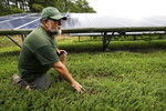 In this Wednesday, Oct. 2, 2019, photo, cranberry grower Mike Paduch pauses near solar arrays in a cranberry bog at his farm, in Carver, Mass. The revenue that solar power offers has been helpful to Paduch as the price of cranberries has dipped in recent years. (AP Photo/Steven Senne)