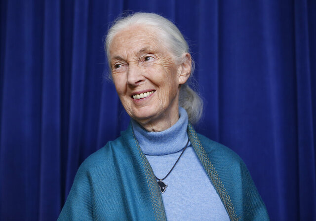 "FILE - This April 3, 2019 file photo shows primatologist Jane Goodall being honored for her lifetime achievements at a ceremony on her 85th birthday in Los Angeles. Goodall says the planet has reaped the benefits of a cleaner environment from society shutting down during the coronavirus outbreak. But the famed primatologist is worried about societal behavior restoring back to the ""business as usual"" mindset after the pandemic is over. (AP Photo/Damian Dovarganes, File)"