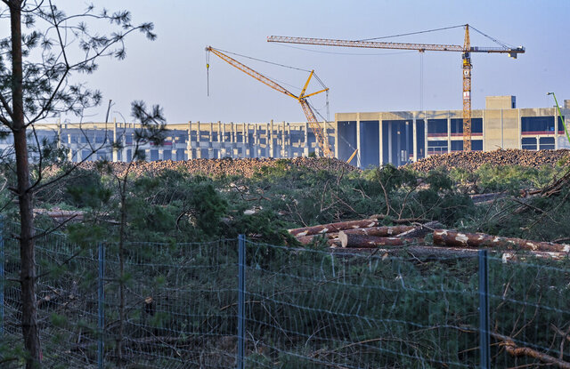 FILE - In this Dec. 8, 2020 file photo, felled trees lie on the construction site of the Tesla Gigafactory in Gruenheide near Berlin, Germany. A German court has ruled that automaker Tesla Inc. has to stop clearing trees on some parts of the site where it's building its first electric car factory in Europe. (Patrick Pleul/dpa via AP, File)