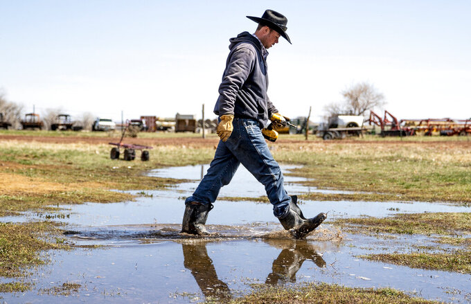 Ranch hand Tyler Kern tromps through standing water at Tarver Heart X Ranch in northeastern Wyoming on April 7, 2021, after a wet snowfall. Much more moisture would need to fall to alleviate a severe drought that has settled in across more than one-quarter of Wyoming. (Mike Moore/Gillette News Record via AP)