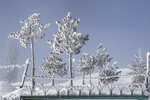 """Trees are covered with hoar-frost on a cold day in Gulmarg, northwest of Srinagar, Indian controlled Kashmir, Monday, Jan. 11, 2021. Snow this winter has brought along with it thousands of locals and tourists to Indian-controlled Kashmir's high plateau, pastoral Gulmarg, which translates as """"meadow of flowers."""