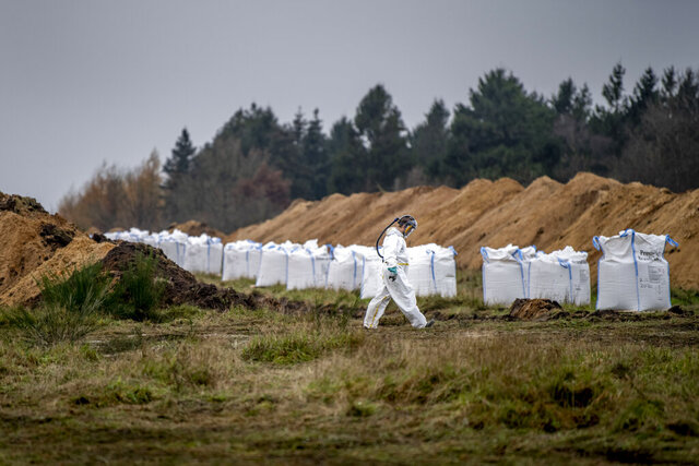 A mass grave is prepared as Danish health authorities, assisted by members of the Danish Armed Forces, work to dispose of dead mink in a military area near Holstebro, Denmark, Monday, Nov. 9 2020.  Danish mink will be buried in mass graves on military land as the country's incinerators and rendering plants struggle to keep up, the Danish environmental and health authorities announced. Denmark will cull about 17 million mink after a mutated form of coronavirus that can spread to humans was found on mink farms. (Morten Stricker/Ritzau Scanpix via AP)