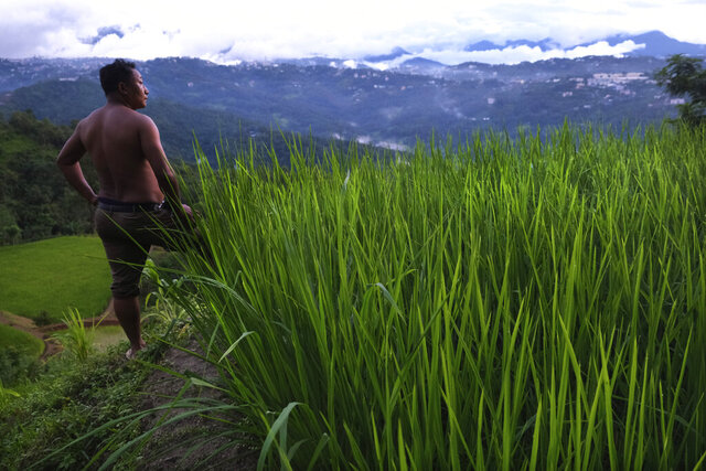 An Angami Naga man stands by a field growing