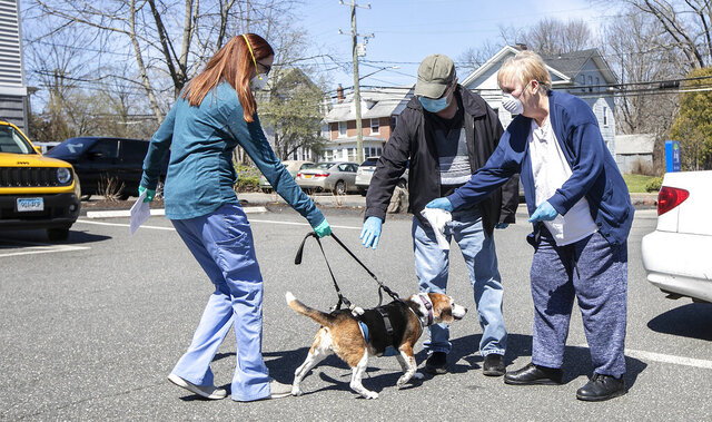 Head Veterinary Technician Nikki Westman, brings beagle Coco, 10, to owners Dan and Pam Flagg, of Wallingford, after a treatment at Meriden Animal Hospital, Monday, April 6, 2020. The hospital is not allowing visitors due to the COVID-19 pandemic. (Dave Zajac/Record-Journal via AP)