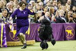 FILE - In this Tuesday, Feb. 11, 2020 file photo, Siba, the standard poodle, competes for Best in Show during 144th Westminster Kennel Club dog show in New York. The Westminster dog show is set to take a long walk.  The nation's top pooch pageant will be held outdoors at an estate about 25 miles north of Manhattan on June 12-13 because of the pandemic, the Westminster Kennel Club said Wednesday, Oct. 21, 2020. (AP Photo/John Minchillo, File)