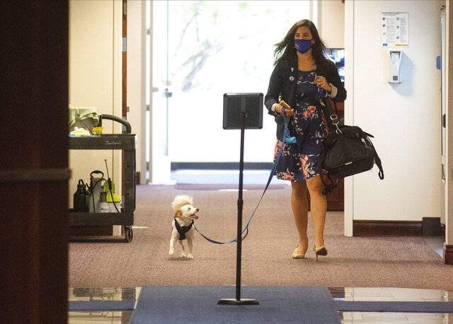 Nevada State Sen. Yvanna Cancela and her dog, Louie arrive at Nevada Legislature on the third day of the 31st Special Session in Carson City, Nev., on Friday, July 10, 2020. Someone who works in the Nevada legislative building has tested positive for the coronavirus as lawmakers debate emergency measures involving the pandemic, an official said Friday. (David Calvert/The Nevada Independent via AP, Pool)
