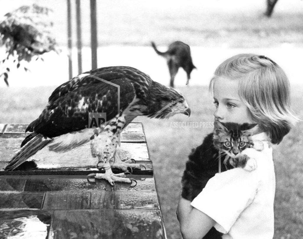 Watchf AP A  KS USA APHS331315 Animals Unusual Combos
