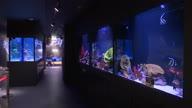 MEEX West Bank Aquarium