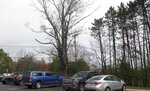 An old, dying maple tree that stands Monday, Oct. 28, 2019, in a commuter parking lot off Interstate 91 in Ascutney, Vt. The land was once part of a farm belonging to Romaine Tenney, whose farm was seized in 1964 to make way for the interstate highway. Tenney burned his barn and his home, with him inside. The tree is going to be removed and the state of Vermont is now looking for a way to remember Tenney. (AP Photo/Wilson Ring)