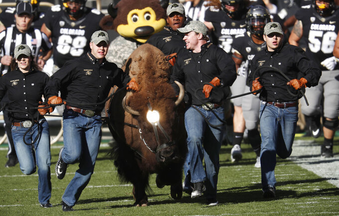 Handlers guide Ralphie, Colorado's mascot, in the animal's ceremonial run to lead players on to the field to face Washington State in the first half of an NCAA college football game Saturday, Nov. 10, 2018, in Boulder, Colo. (AP Photo/David Zalubowski)