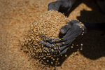 An Ethiopian woman scoops up portions of yellow split peas to be allocated to waiting families after it was distributed by the Relief Society of Tigray in the town of Agula, in the Tigray region of northern Ethiopia, on Saturday, May 8, 2021. (AP Photo/Ben Curtis)