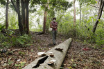 Dumas Galvez, a researcher of the Smithsonian Tropical Research Institute, walks in a forest searching for ants, near his home in Paraiso, Panama, Tuesday, March 30, 2021. When his laboratory in Gamboa closed due to the COVID-19 pandemic, Galvez moved dozens of ant colonies to his home in Paraiso to continue his research. (AP Photo/Arnulfo Franco)