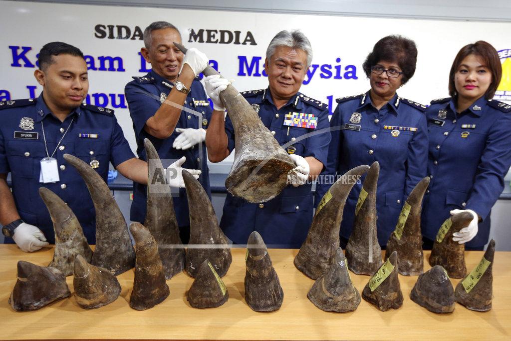 Malaysia Rhino