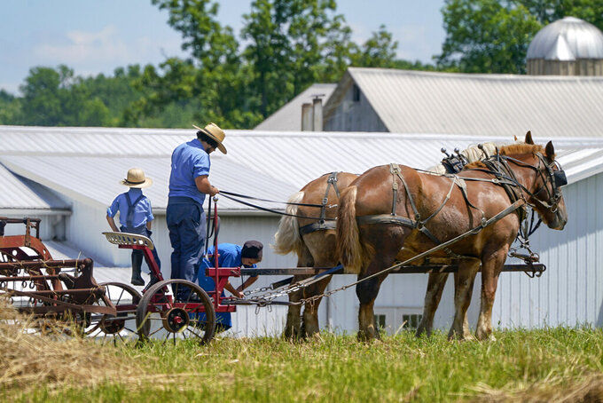 People in Amish country prepare a horse team to work on a farm in Pulaski, Pa., Wednesday, June 23, 2021. The vaccination drive is lagging far behind in many Amish communities across the U.S. following a wave of virus outbreaks that swept through their churches and homes during the past year. (AP Photo/Keith Srakocic)