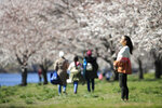 A woman takes in the afternoon sun surrounded by cherry trees in full bloom, along Kelly Drive in Philadelphia, Thursday, March 26, 2020. Mayor Jim Kenney has issued a stay-at-home order to the nation's sixth most-populated city to keep its residents from leaving home, except to get food, seek medical attention, exercise outdoors, go to a job classified as essential or other errands that involve personal and public safety. (AP Photo/Matt Rourke)