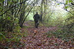 In this photo taken on Sunday, Nov. 10, 2019, Carlo Olivero walks in the walks the woods around Alba, Italy, with his 3-year-old dog Steel in search of prized white truffles. Olivero has been hunting truffles for more than 40 years, and worries about climate change and the transition of wooded land to vineyards and orchards will impoverish future truffle production. (AP Photo/Martino Masotto)