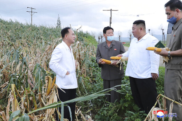 In this undated photo provided on Friday, Aug. 28, 2020, by the North Korean government, North Korean leader Kim Jong Un, second from right, holds a corn during his visit to a western coastal area in South Hwanghae province, North Korea, where Typhoon Bavi made landfall early Thursday, Aug. 27. Independent journalists were not given access to cover the event depicted in this image distributed by the North Korean government. The content of this image is as provided and cannot be independently verified. Korean language watermark on image as provided by source reads: