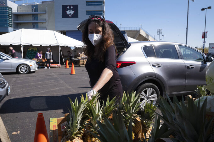 A volunteer picks up pineapples to hand off to slowly moving vehicles at a Foodshare distribution center at Rentschler Field in East Hartford, Conn., Thursday, May 7, 2020, during the coronavirus pandemic. Foodshare has been offering the emergency drive-thru distribution for three weeks and said that as the lines continue to grow, they provide food to approximately 1,200 households per day. (AP Photo/Mark Lennihan)