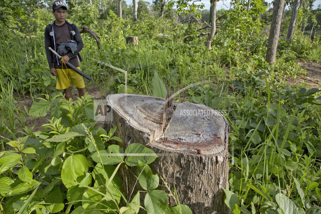 Myanmar Lost Forests