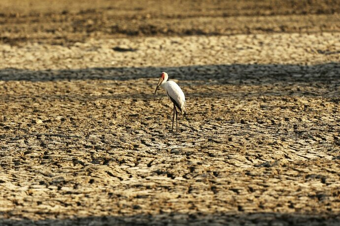 FILE - In this Oct, 27, 2019 file photo, a bird stands on a sun-baked pool that used to be a perennial water supply in Mana Pools National Park, Zimbabwe. The chair of the two-week COP25 climate summit attended by nearly 200 countries warned at its opening Monday Dec. 2, 2019 that those refusing to adjust to the planet's rising temperatures