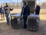 In this Jan. 15, 2021 image provided by the ABQ BioPark officials with the U.S. Fish and Wildlife Service, the U.S. Department of Agriculture in Texas and Mexican wildlife managers prepare to transport a pack of endangered Mexican gray wolves from Albuquerque, N.M. The animals were taken to Mexico, where they will eventually be released into the wild. (ABQ BioPark via AP)