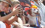 A dog sports an orange hairdo during an Orange and Brown NFL football practice in Cleveland, Sunday, Aug. 8, 2021. (John Kuntz/The Plain Dealer via AP)