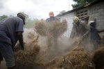 In this May 27, 2019 photo, workers prepare stringy roots culled from the vetiver plant, at a factory in Les Cayes, Haiti. The men gather the roots to produce an essential oil used in fine perfumes ranging from Chanel to Guerlain. The plant is in the same family as corn and sugarcane. (AP Photo/Dieu Nalio Chery)