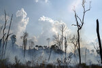 FILE - This Aug. 25, 2019 file photo shows charred consumed by a fire in an area in the Alvorada da Amazonia region, in Novo Progresso, Para state, Brazil. In November 2019 police accused several volunteer firefighters of setting forest fires to get funding through local NGOs in Alter do Chao, a town of less than 10,000 people on the edge of the Tapajos river in the state of Para. Federal prosecutors quickly said their investigation found no such evidence, the local police officer leading the investigation was removed from the case, and a judge ordered the firefighters be released from prison. (AP Photo/Leo Correa)
