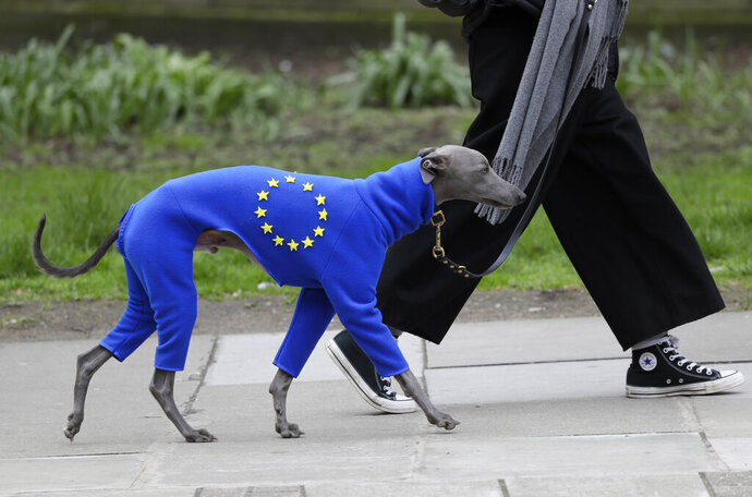 A demonstrator leads a dog wearing a suit in the EU colors during a Peoples Vote anti-Brexit march in London, Saturday, March 23, 2019. The march, organized by the People's Vote campaign is calling for a final vote on any proposed Brexit deal. This week the EU has granted Britain's Prime Minister Theresa May a delay to the Brexit process. (AP Photo/Kirsty Wigglesworth)