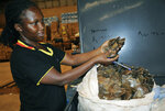 A Customs officer displays some of the seized pangolin scales to the media, in Kampala, Uganda Friday, Feb. 1, 2019. Ugandan authorities have seized 750 pieces of ivory and thousands of pangolin scales being smuggled from neighboring South Sudan, in one of the largest seizures of wildlife contraband in the East African country, according to the Uganda Revenue Authority. (AP Photo/Ronald Kabuubi)