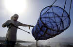 In this Jan. 23, 2018 photo, an employee of the Dibba Bay Oyster Farm cleans a lantern net at the company's harvesting and processing facilities, in Dibba, United Arab Emirates.The waters of the Persian Gulf have long been home to pearl oysters. Now, off the shores of the Fujairah, an emirate with a coastline that juts out into the Gulf of Oman, a new type of oyster is thriving -- the edible kind. (AP Photo/Kamran Jebreili)