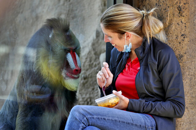 Mary Yoder, primates collection manager eats her lunch by the viewing glass to keep company with a Mandrill named