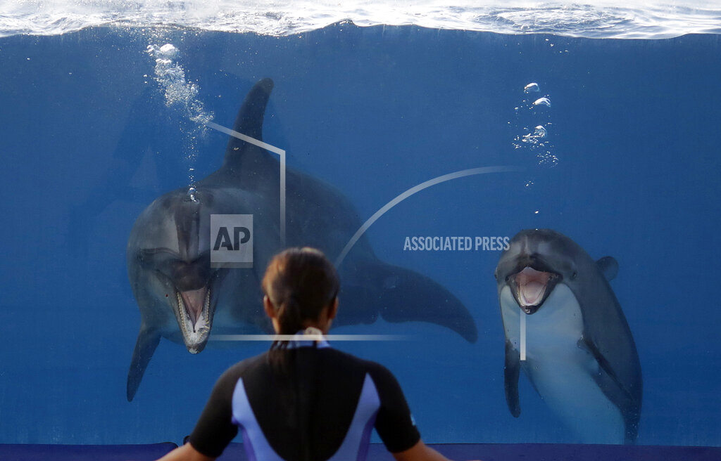 APTOPIX Japan Aquarium