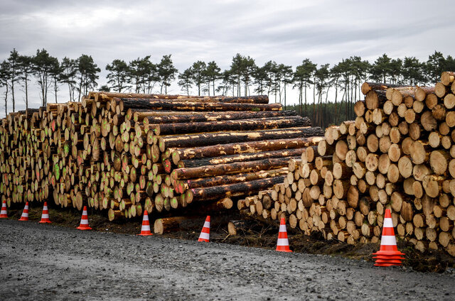 Cleared trees lie stacked on the entrance to the site for the planned Tesla factory near Gruenheide, Germany, Sunday, Feb. 16, 2020. The Higher Administrative Court for Berlin-Brandenburg ordered Tesla to stop clearing trees on the wooded site near Berlin until it considers an environmental group's appeal. In a statement Sunday, the court said it had to issue the injunction because otherwise Tesla might have completed the work over the next three days. (Britta Pedersen/dpa via AP)