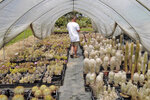 Andrea Cattabriga, President of the Association for Biodiversity and Conservation, walks amongst his homegrown rare cacti at his greenhouse in San Lazzaro di Savena, Italy, Saturday, June 5, 2021. Cattabriga, a top expect on rare cacti, was called by the Carabinieri Military Police in February 2020 as a consultant to examine thousands of cacti stolen from from the Atacama Desert in Chile, confiscated when police conducted a massive cactus bust at a greenhouse along the Adriatic Coast in Italy.  (AP Photo/Trisha Thomas)
