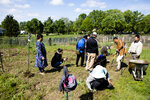 In this May 11, 2019 photo, Mary Tamang, bottom center, works with members of her extended family to clear a plot in the community garden at the Franciscan Sisters of the Poor in Hartwell, a neighborhood in Cincinnati. The majority of gardeners on this acre are refugees, some of the 12,000 Bhutanese who have resettled in Cincinnati. Most, like Tamang, came to this country after spending years, if not decades, in Nepalese camps. (Albert Cesare/The Cincinnati Enquirer via AP)