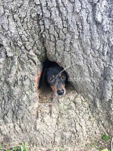 APTOPIX Dog Trapped in Tree